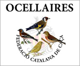 Ocellaires